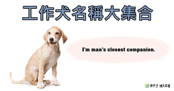 工作犬英文